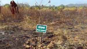 रतनपुर जंगल में आग