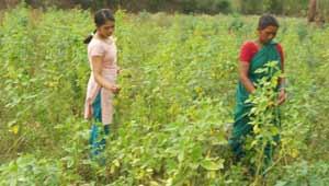 सब्जी की खेती
