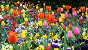 विदेशी फूल
