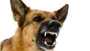 रायपुर के आवारा कुत्ते