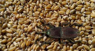 पीडीएस छत्तीसगढ़ किसान अनुदान