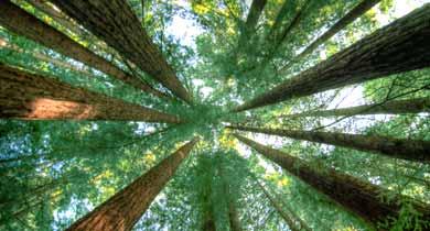 छत्तीसगढ़ वन जंगल की कटाई