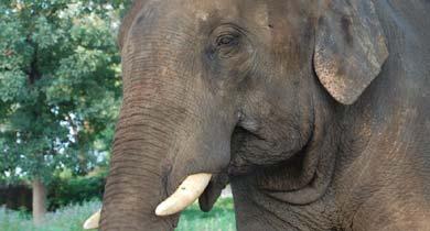 छत्तीसगढ़ में 32 हाथियों की करंट से मौत