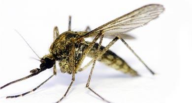 मलेरिया में छत्तीसगढ़