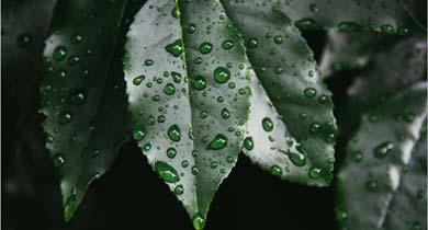 बारिश में जिंदगी