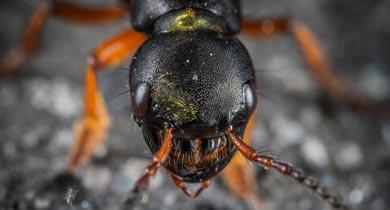 चींटियों के पास देखने की लाजवाब क्षमता