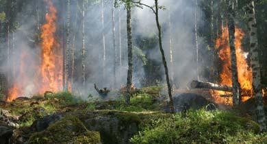 छत्तीसगढ़ में जंगल की आग