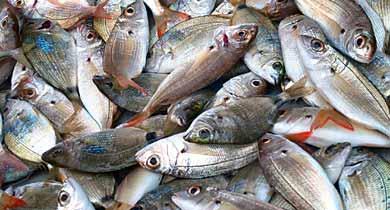 मछली फार्मलिन