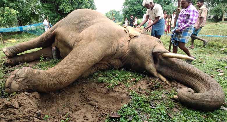 गणेश हाथी